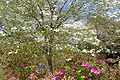Brookgreen Gardens35.jpg