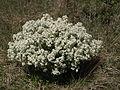 Brzke jaro - dunajovicke kopce - narodni prirodni rezervace - 02.jpg