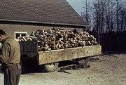 Buchenwald Corpses 60623