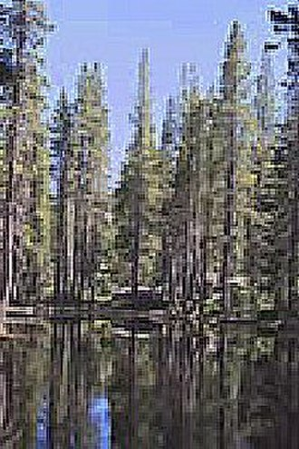 Bucks Lake Wilderness - Bucks Lake Wilderness, Plumas National Forest.