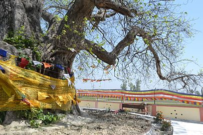 Buddha Relic Distribution Site 02.jpg