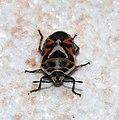 Bug October 2007-2.jpg
