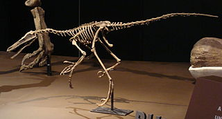 <i>Buitreraptor</i> Dromaeosaurid dinosaur genus from the Late Cretaceous