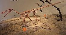 Buitreraptor FMNH.jpg
