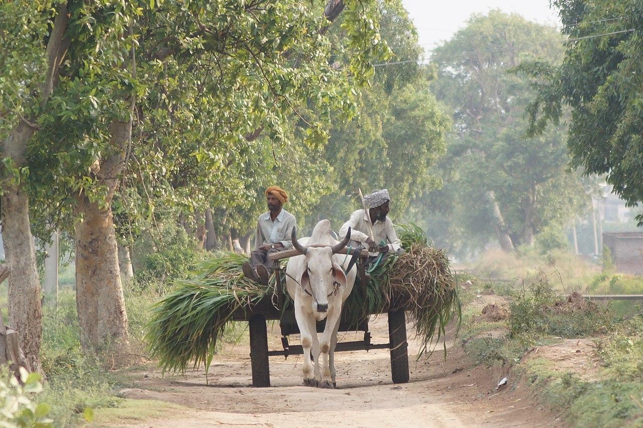 File Bullock Cart In Punjab India Jpg Wikimedia Commons