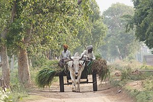 Bullock cart - A bullock cart in Punjab, India