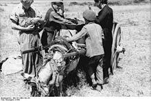 contadini nel sud dell'Italia nel 1943