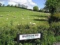 Burrow Road, Omagh - geograph.org.uk - 447464.jpg