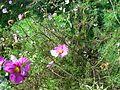 Butterfly on flower 2.jpg