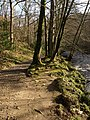 By the River Teign - geograph.org.uk - 1199998.jpg