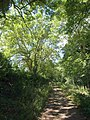 Byway to Buckles Lodge - geograph.org.uk - 2000413.jpg
