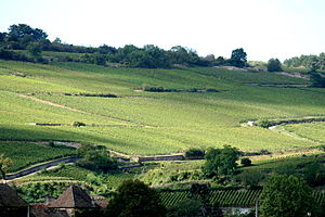Côte de Beaune region, Burgundy.jpg