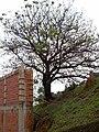 CAMINHO DO ANTIGO PONTILHÃO DA ESTRADA DE FERRO DE INDAIATUBA - panoramio (1).jpg