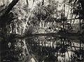 COLLECTIE TROPENMUSEUM Palmbomen worden weerspiegeld in een meer of oase bij Nefta TMnr 60048389.jpg