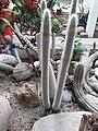 Cactus20180912 120445.jpg