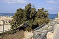 Caesarea maritima (DerHexer) 2011-08-02 105.jpg