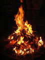 Campfire Pinecone.png