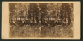 Camping scene on the Merced River, by E. & H.T. Anthony (Firm).png