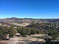 Campos de olivos.jpg