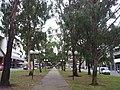 Canberra ACT 2601, Australia - panoramio (42).jpg