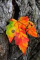 Captured-Hanging Color (6312460803).jpg