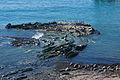 Carpinteria Harbor Seal Preserve.jpg