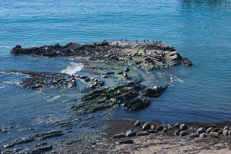 Carpinteria State Beach - Picture from the observation cliff of the rookery at the Carpinteria Harbor Seal preserve