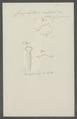 Caryophyllaeus mutabilis - - Print - Iconographia Zoologica - Special Collections University of Amsterdam - UBAINV0274 105 16 0003.tif