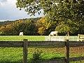 Cattle grazing in autumn sunshine - geograph.org.uk - 1023199.jpg