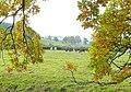 Cattle grazing near Wood Stanway Farm - geograph.org.uk - 1547560.jpg