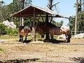 Cavalos nos Jardins do Parque da Pena em Sintra (37106630302).jpg