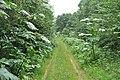 Ceļš ar latvāņiem, Zaubes pagasts, Amatas novads, Latvia - panoramio.jpg