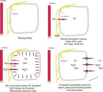 English: Illustrating mechanism for transporta...