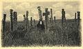 Cementerio mapuche(2).jpg