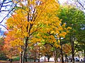 Central Park in the fall - panoramio.jpg