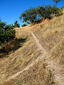 Cerro Condell, sendero 30 (16164704414).jpg