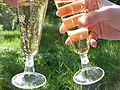 Champagne glasses 1.JPG