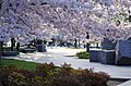 Cherry tree blossoms frame the exit of FDR Memorial - 2013-04-09 (8634983919).jpg
