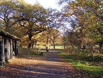 Cherry Tree Wood - Cherry Tree Wood in autumn