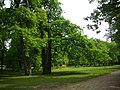 Cheverny - château, parc (17).jpg