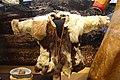 Child's coat, Sami people, Torne Lapland, Sweden, reindeer fur and sheepskin, No. 1933.14.0011 - Etnografiska museet - Stockholm, Sweden - DSC01298.JPG