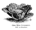Chou Milan Cressonnier Vilmorin-Andrieux 1904.png