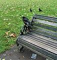 Clapham Common crows (8094683958).jpg