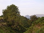 Cleft of Rowan Trees - geograph.org.uk - 49189.jpg