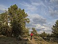 Cline Buttes Bike Trail, 2016.jpg