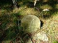 Cmentarz żydowski w Dobrodzieniu48.JPG