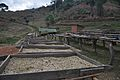 Coffee Processing – Sieves and drying racks.jpg