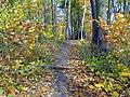Color trail - panoramio.jpg