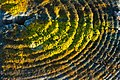 Concentric rings (8196880223).jpg