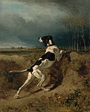 Constant Troyon - Hound Pointing - 24.345 - Museum of Fine Arts.jpg
